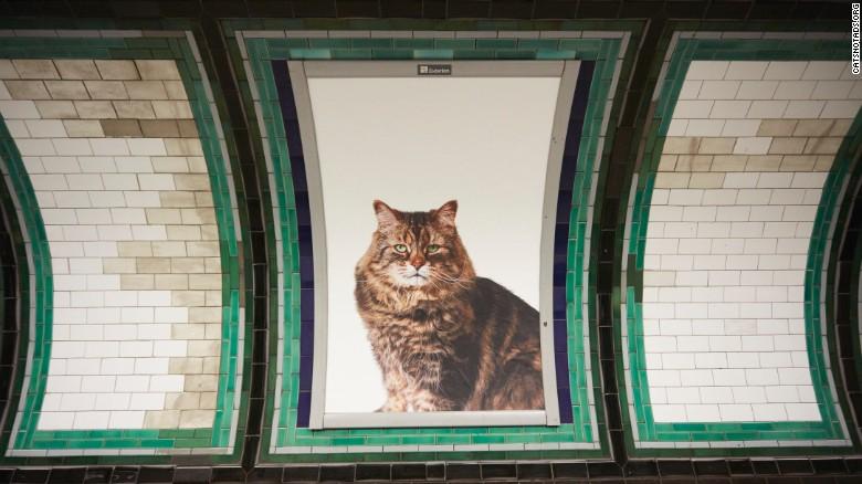 gato-londres-metro