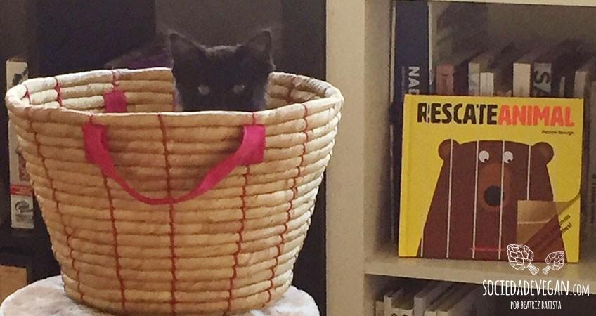 gatos-veganos-banner